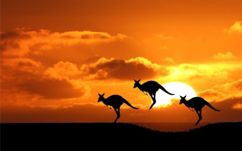 Kangaroos_wallpapers_116